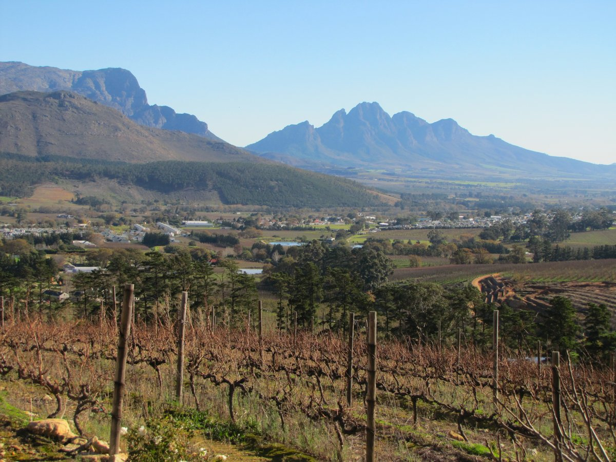 Viñedos sudafricanos cerca de Stellenbosh