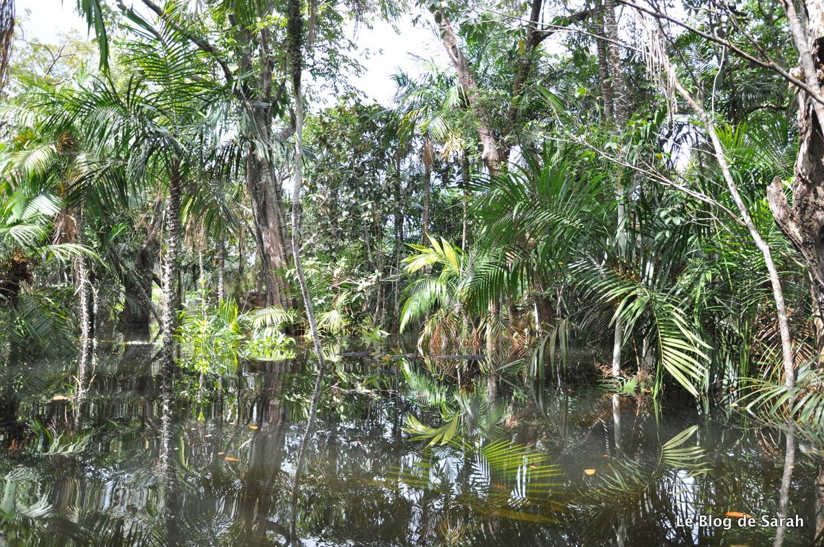 La selva amazónica inundada cerca de Alter-do-Chao