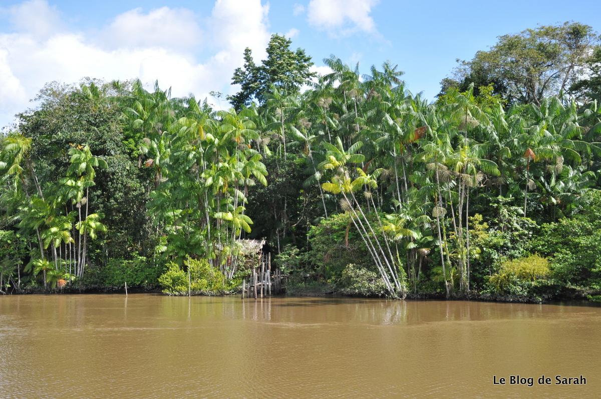 Descenso del Amazonas en barco con vista a la selva