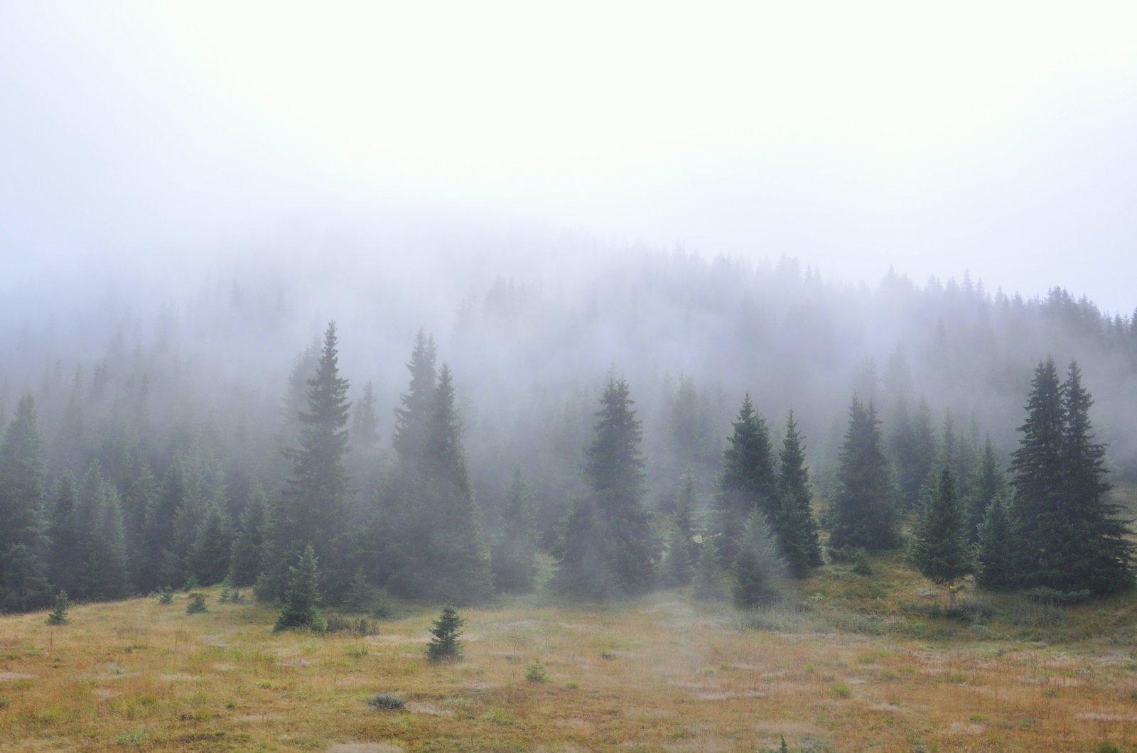 bulgaria-bosque-niebla