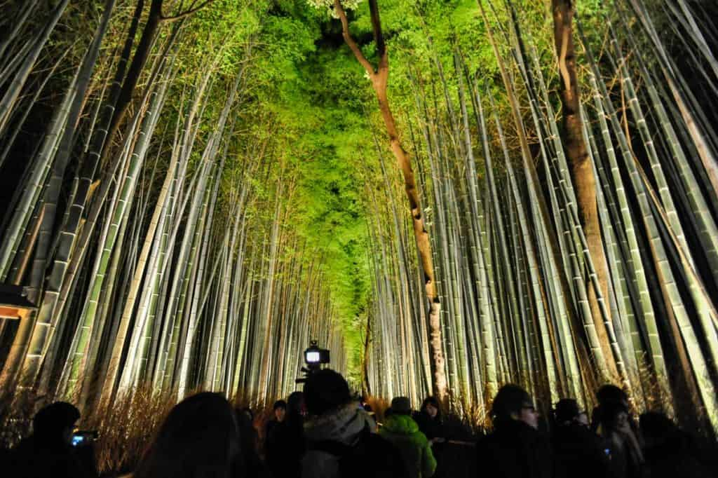 Bosque iluminado de Arashiyama bambo