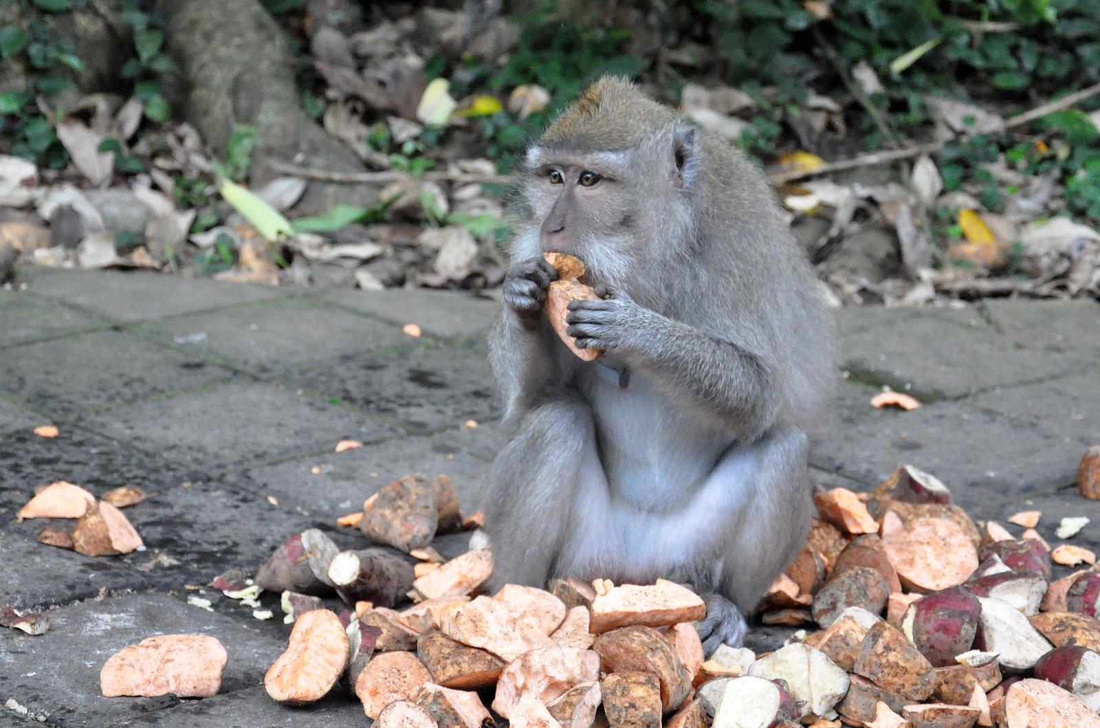 bosque-monos-ubud-bali
