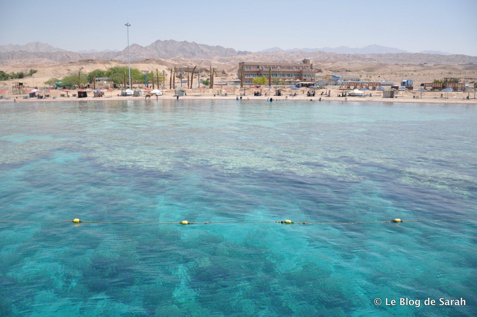 Fondo de coral cerca de Aqaba