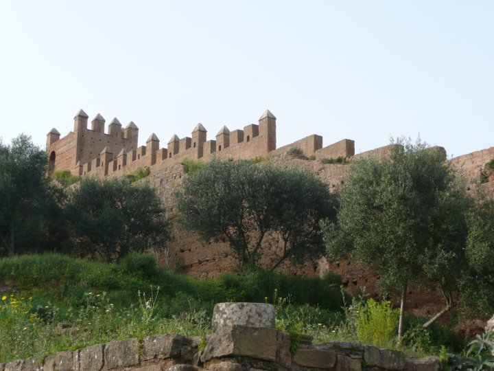 Árboles de Argán en Rabat, frente a la necrópolis de Chellah (foto Emily Zanier Travel and Film)