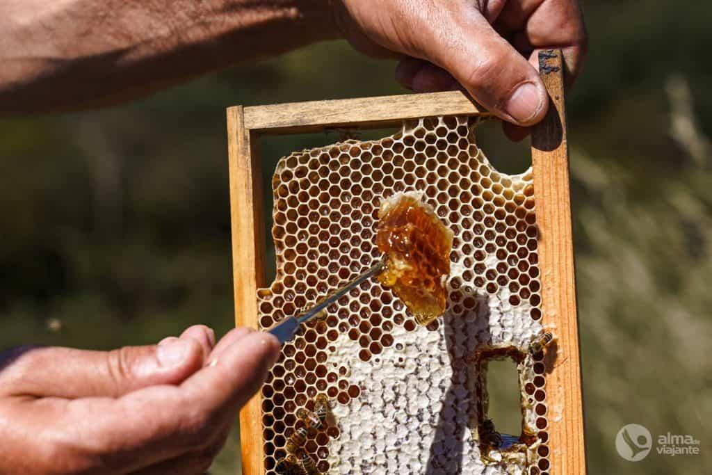Miel de abejas buckfast