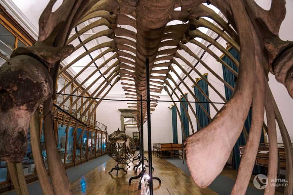 Galería de Historia Natural del Museo de Ciencias de Coimbra