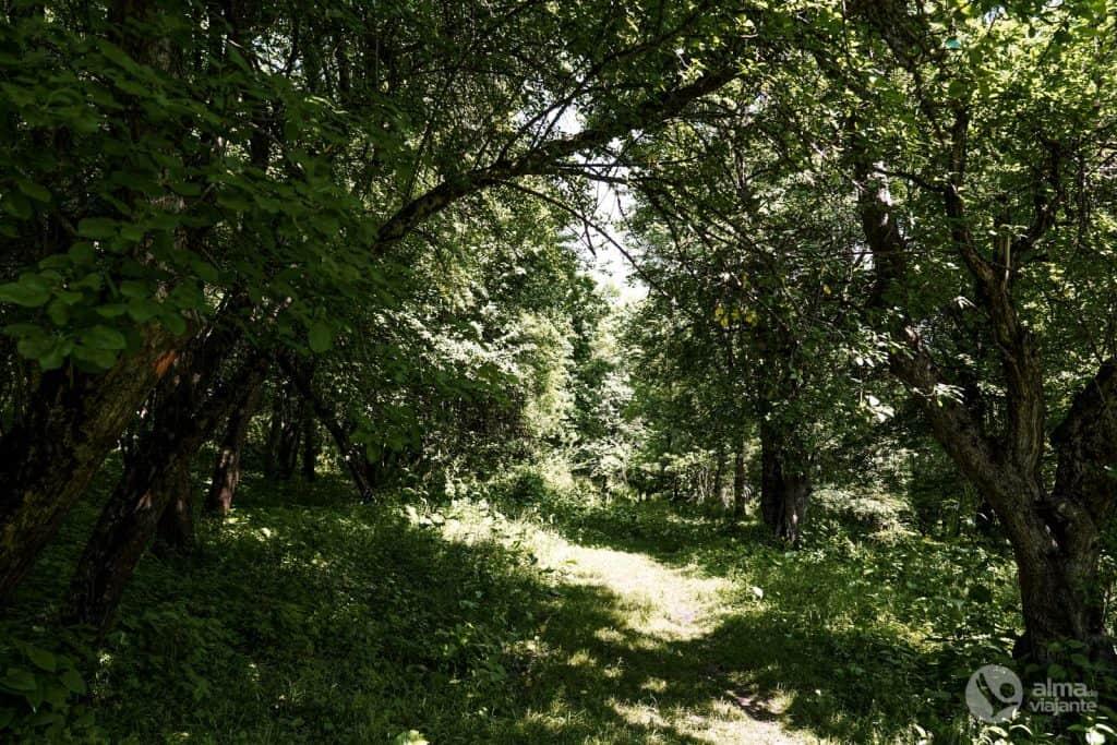 Parque Natural de Dilijan