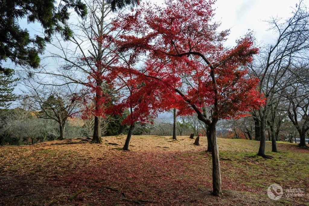 Parque Nara, Japón