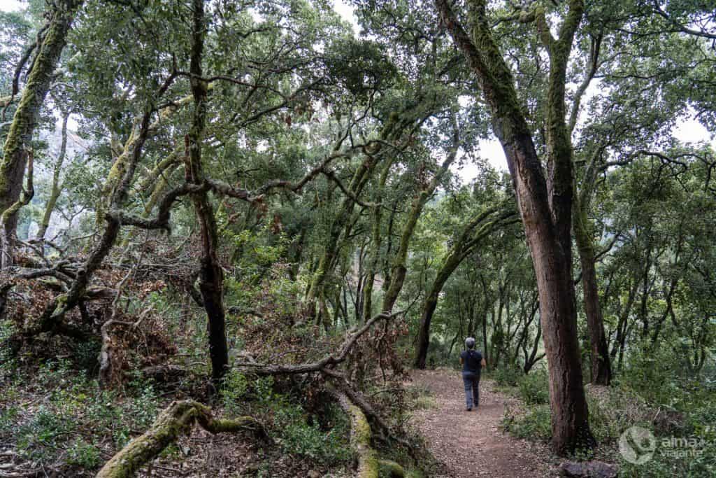 Hacer el rastro de la pasarela de fragas de São Simão