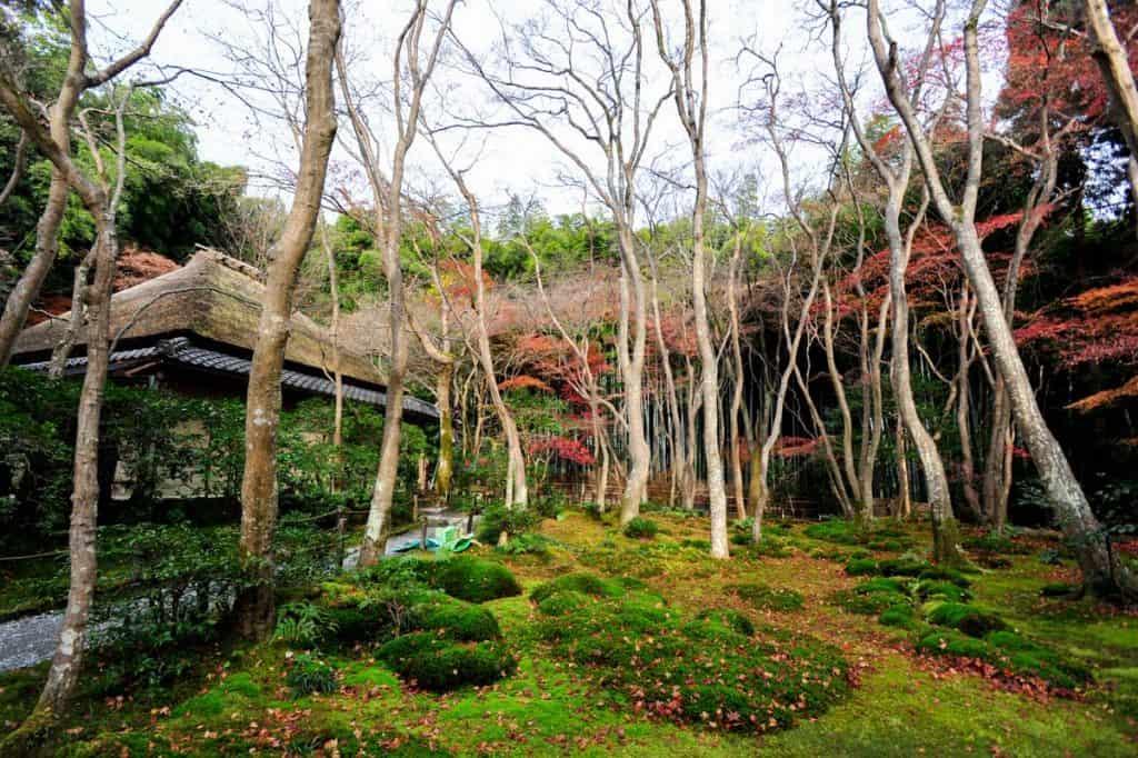 Qué hacer en Kyoto: Gio-ji Temple, Arashiyama