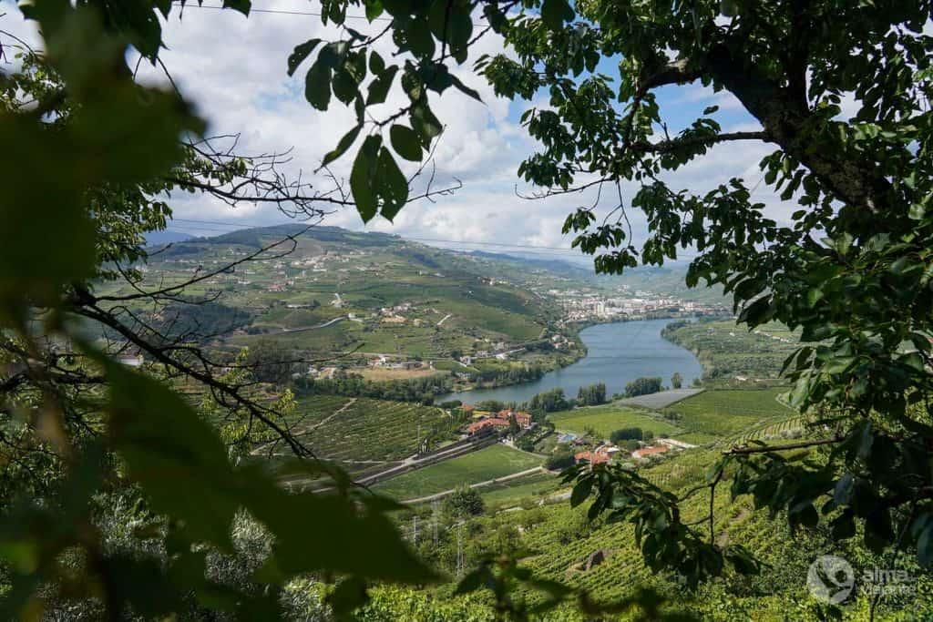 Ruta a pie del vino de Oporto