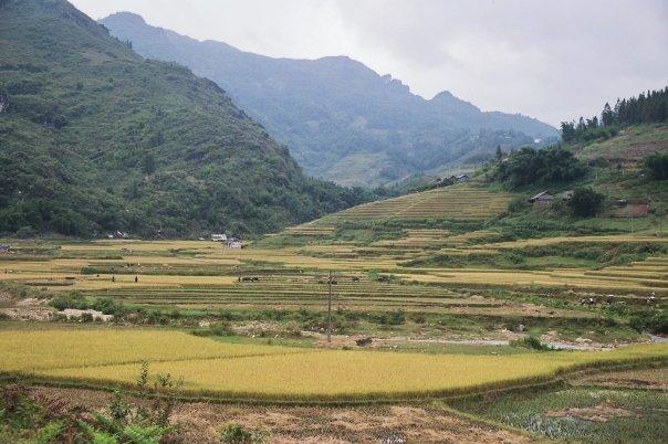 Montañas y arrozales en la región de Sapa