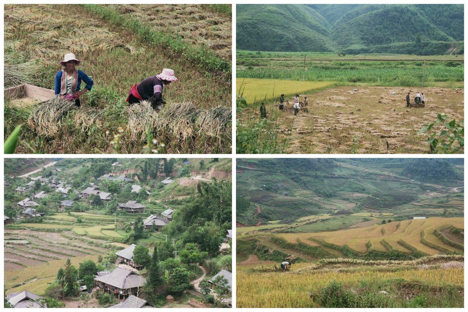 viajes-vietnam-sapa-rice