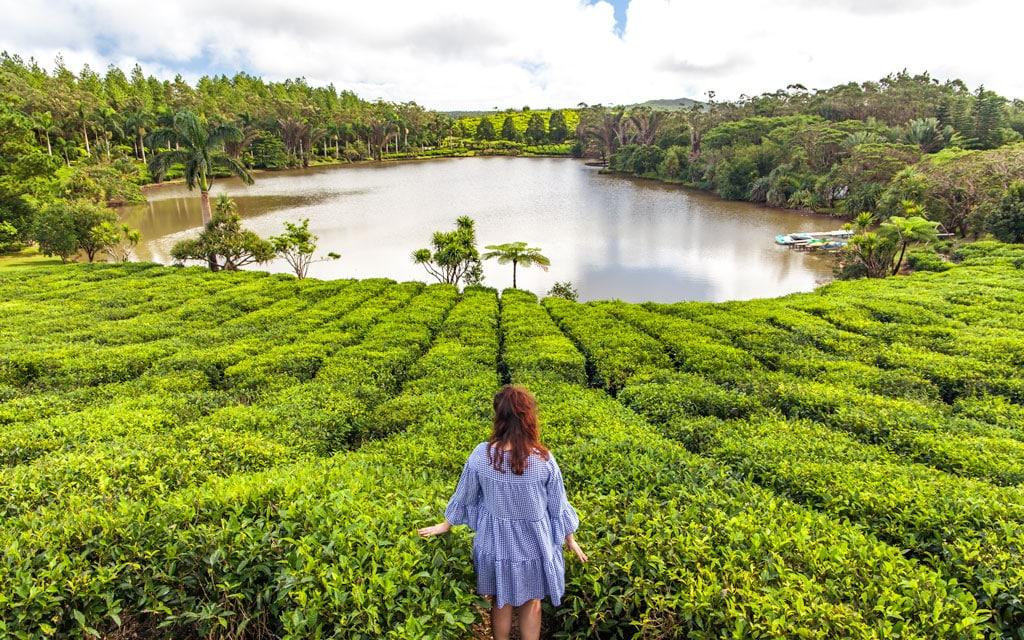 Plantaciones de té en Mauricio