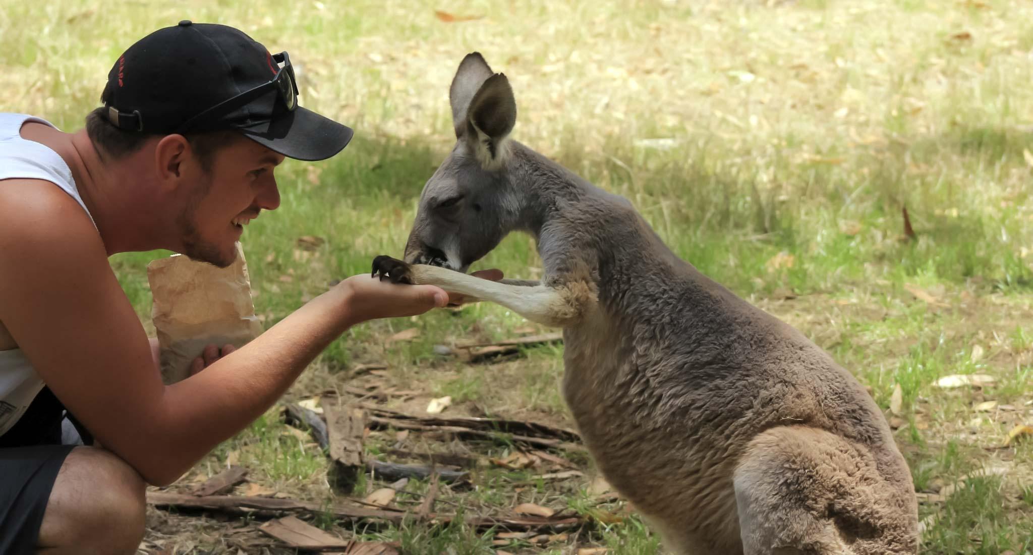 Un canguro con Dan