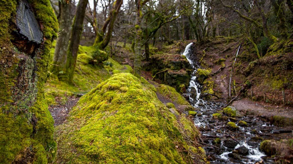 Parque Nacional de Dartmoor